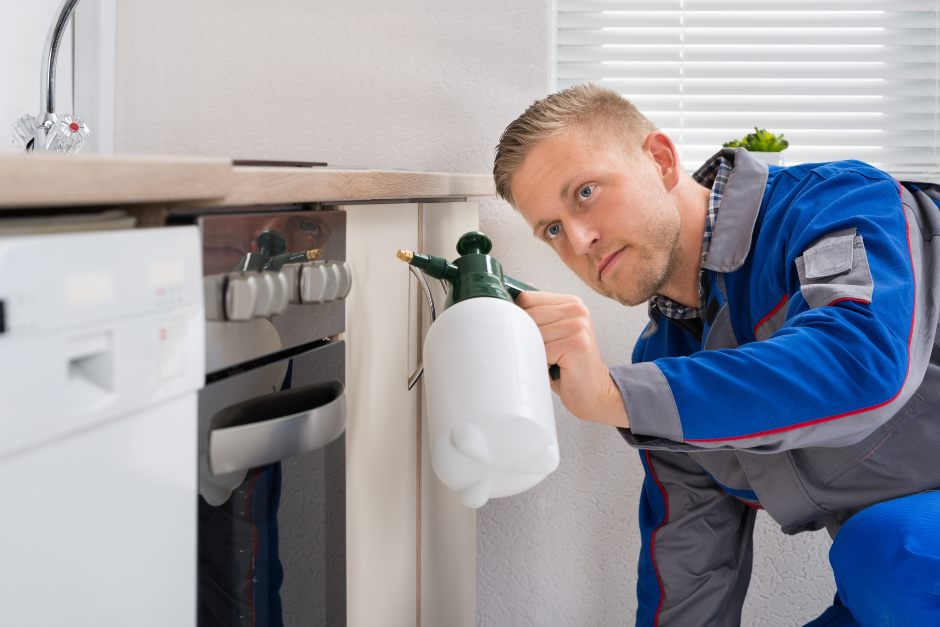 Pest Inspection, Pest Control in Bushey, Bushey Heath, WD23. Call Now 020 8166 9746