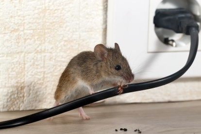 Pest Control in Bushey, Bushey Heath, WD23. Call Now! 020 8166 9746