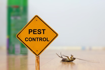 Pest Contol in Bushey, Bushey Heath, WD23. Call Now 020 8166 9746